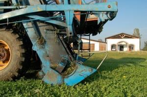 Coltivazioni nell'azienda agricola Grana d'Oro