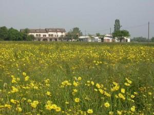 Azienda agricola Grana d'Oro