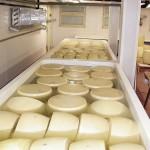 Produzione Parmigiano Reggiano, la salatura