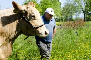 Matteo Catellani, Parmigiano Reggiano vacche rosse Grana d'Oro